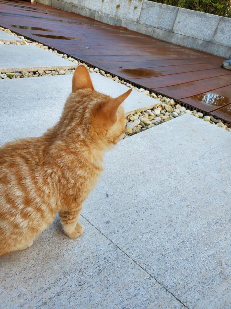 HYATT_REGENCY_Danang_Resort&Spa_Cat